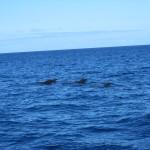 Киты в Атлантическом океане