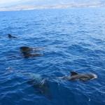 Стая китов