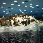 Крупнейший в мире пингвинарий находится на Канарах, в Лоро-Парке
