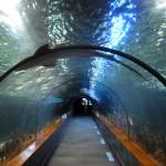 Акулы в Лоро-Парке