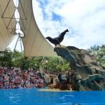 Шоу морских котиков в Лоро-Парке