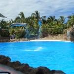 Шоу дельфинов в Лоро-Парке
